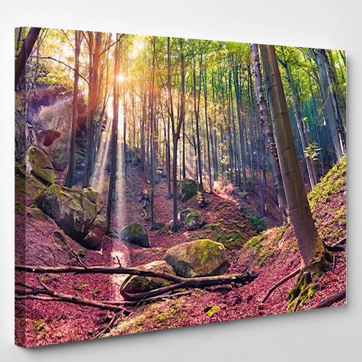 Autumn Morning In Mystical Woods Instagram Toning - Nature Canvas Wall Decor