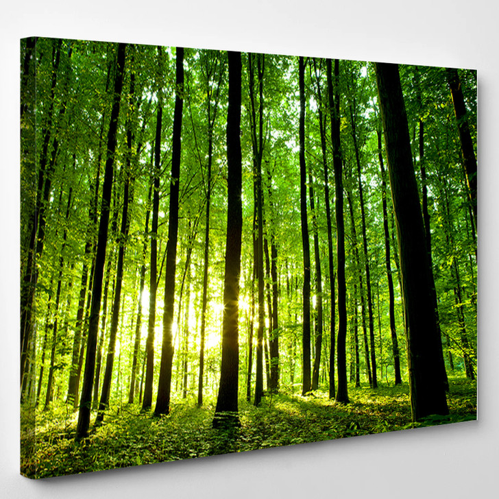 Beautiful Green Forest - Nature Canvas Wall Decor