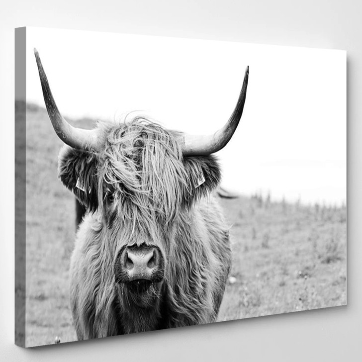 Black And White Highland Cow - Animals Canvas Wall Decor