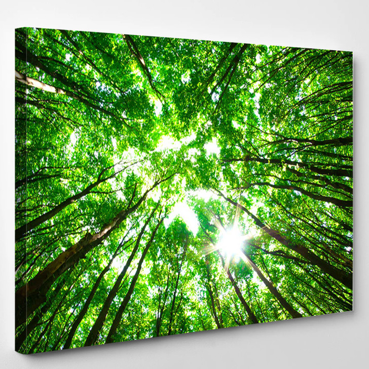Green Forest - Nature Canvas Wall Decor
