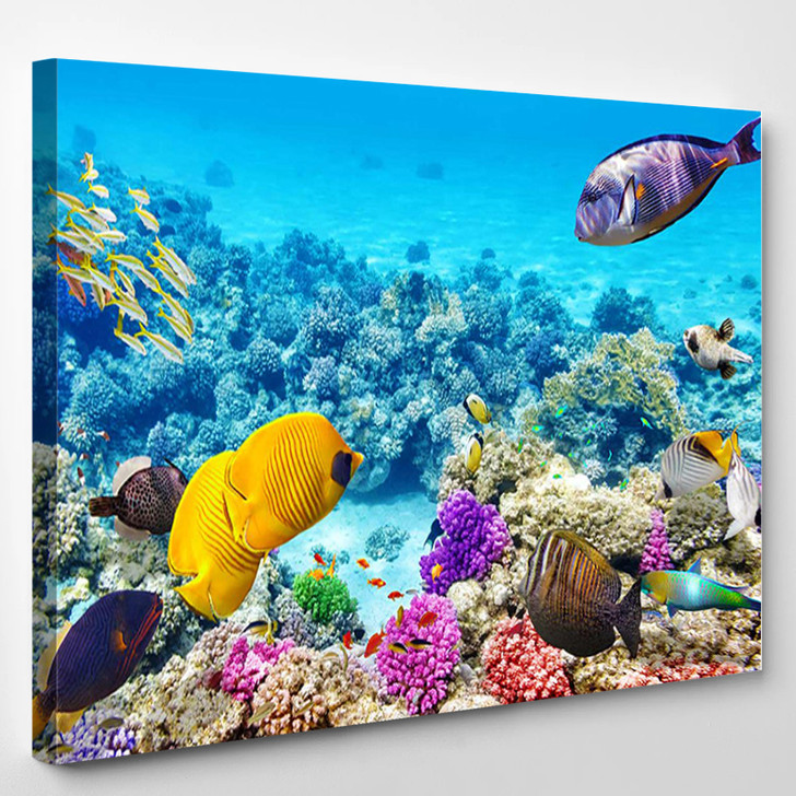 Wonderful And Beautiful Underwater World With Corals And Tropical Fish - Animals Canvas Wall Decor