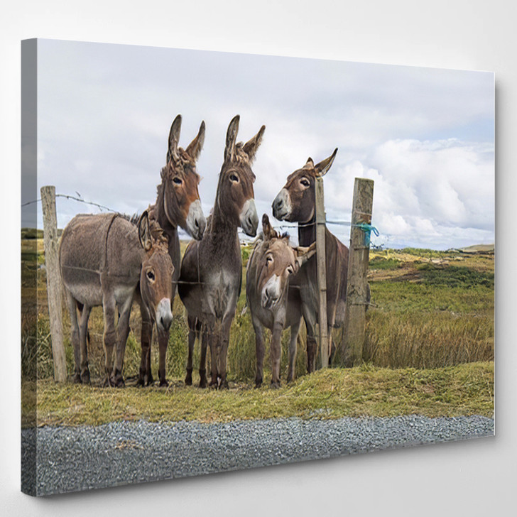 Donkeys In The Countryside - Animals Canvas Wall Decor