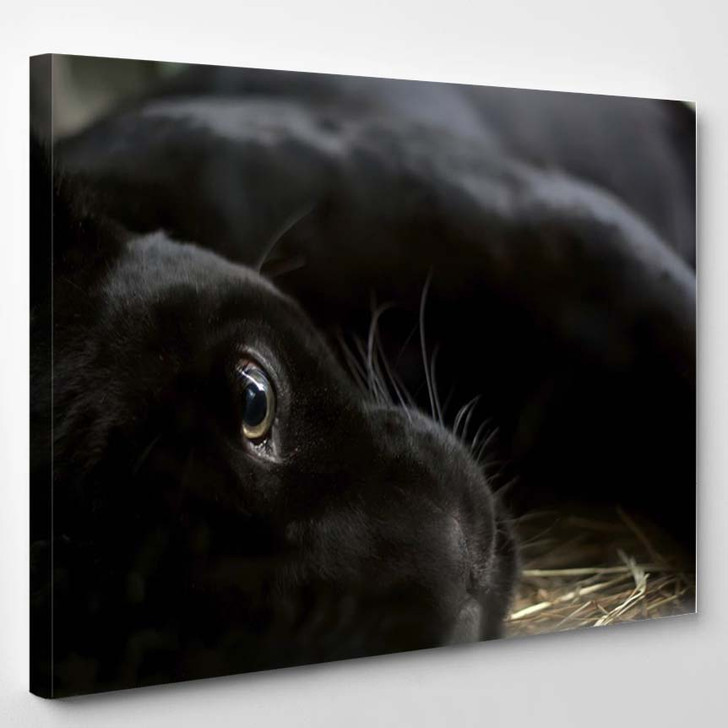 Abstract Illustration On A Music Theme - Animals Canvas Wall Decor
