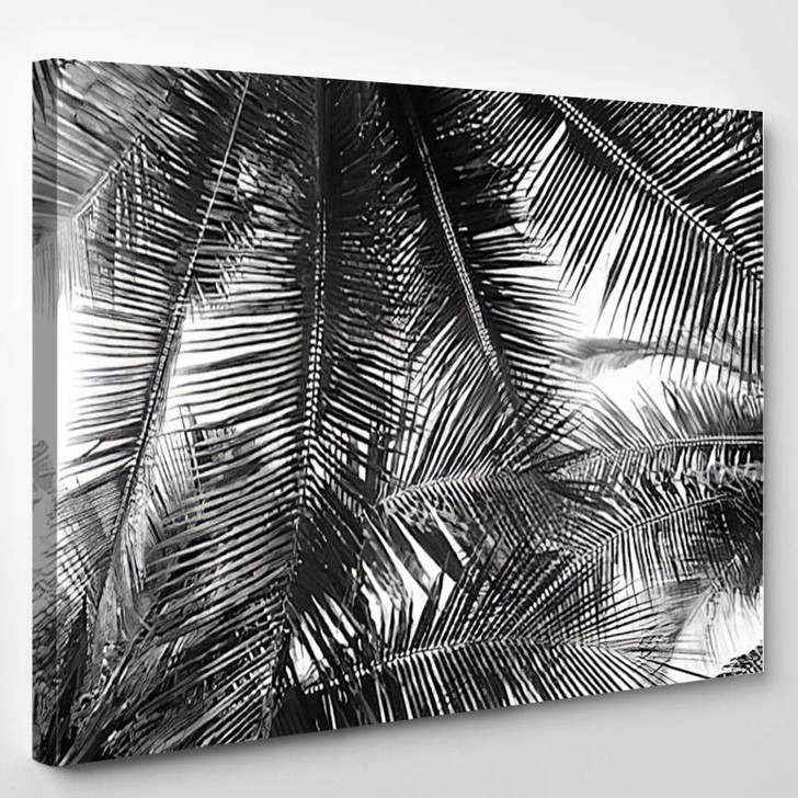Beautiful Palms Leaf On White Background - Nature Canvas Wall Decor