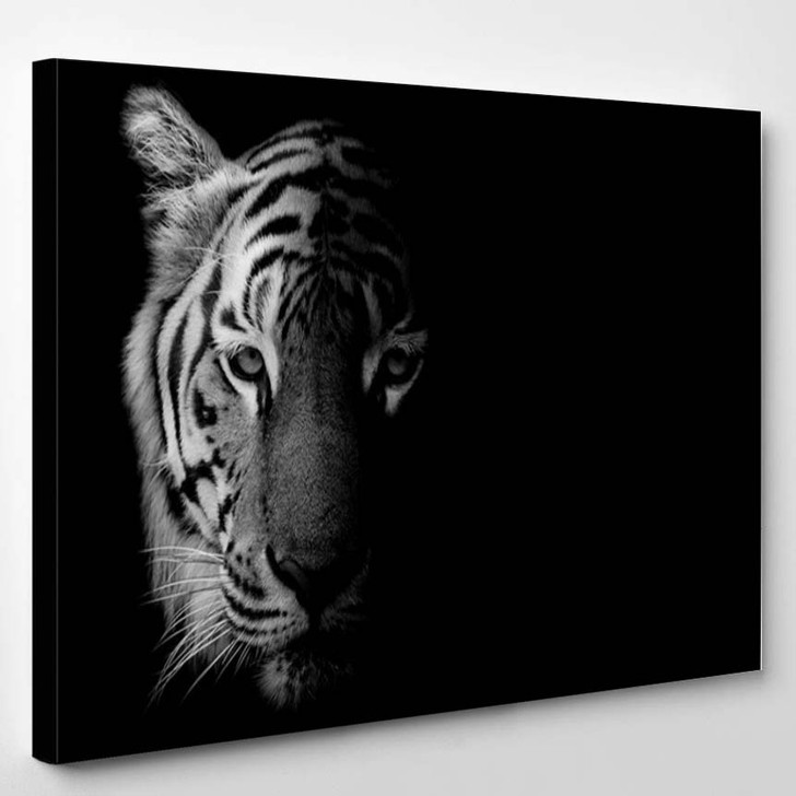 Black White Beautiful Tiger Isolated On Black Background - Animals Canvas Wall Decor