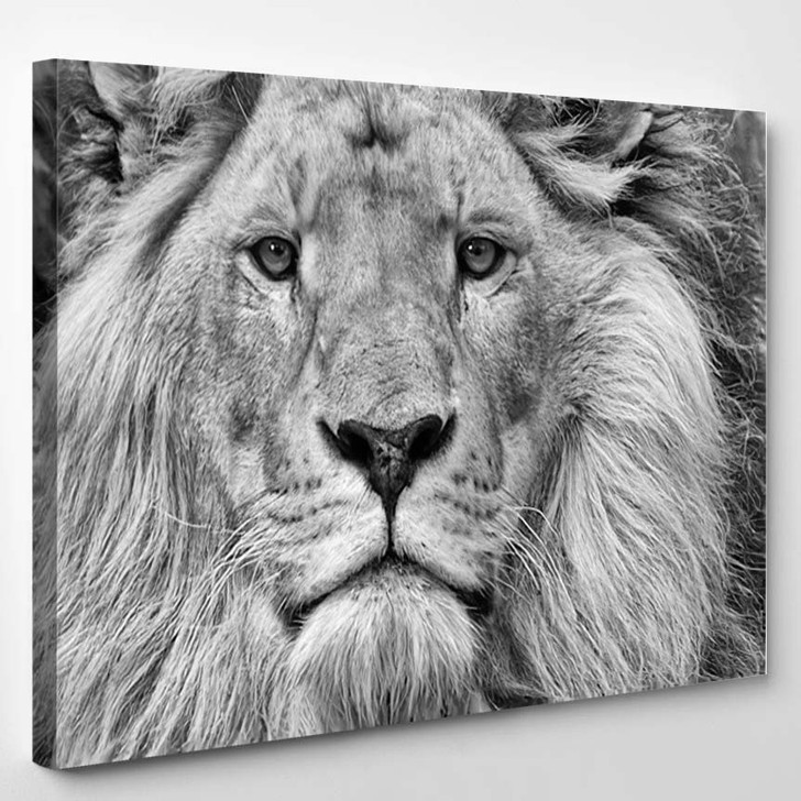 Black And White Lion - Animals Canvas Wall Decor