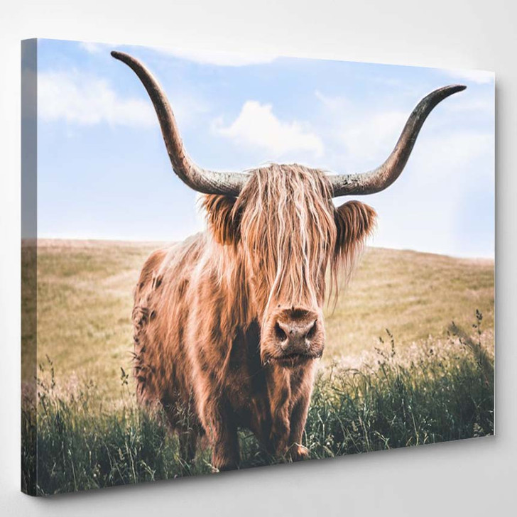 Close Up Brown Highland Cow 2 - Animals Canvas Wall Decor