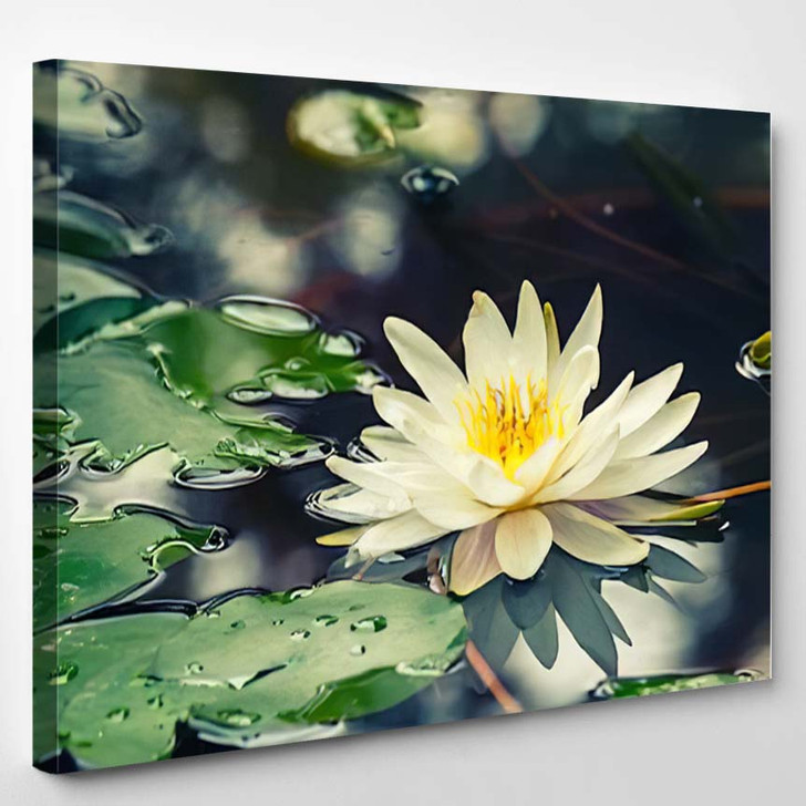 Lotus Flower - Nature Canvas Wall Decor