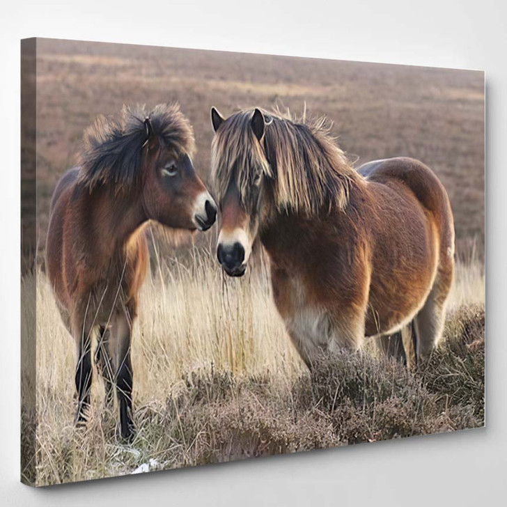Pony And Horse On Moorland In Exmoor - Animals Canvas Wall Decor
