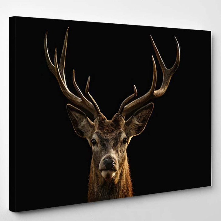 Red Deer Portrait On Black Background - Animals Canvas Wall Decor