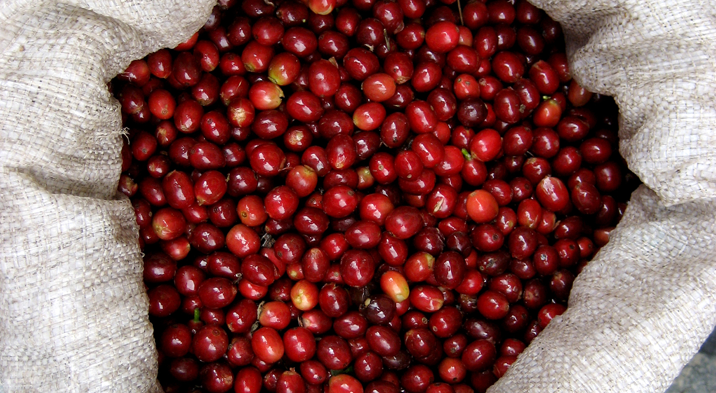 top view close-up of red coffee cherries in a white burlap bag
