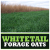 Real World Wildlife Whitetail Forage Oats