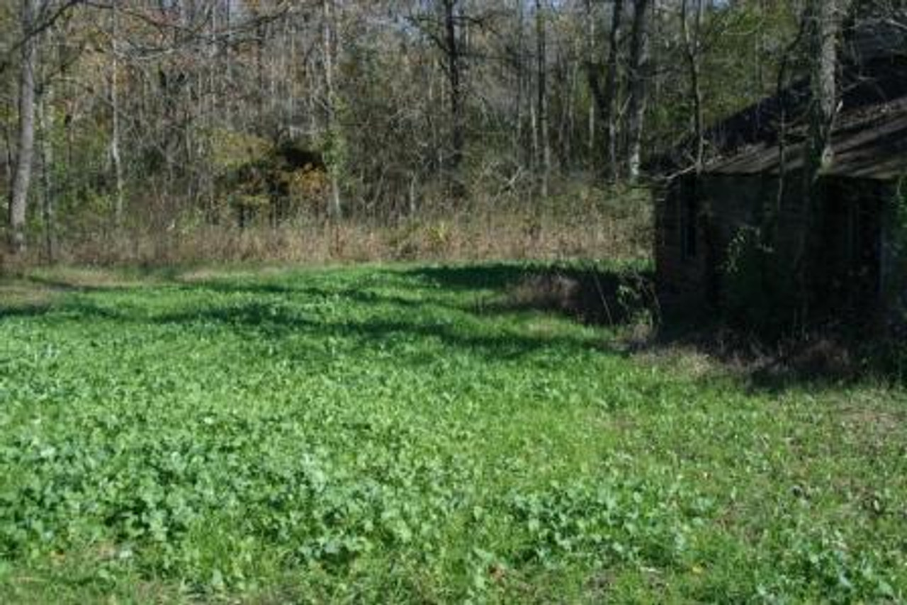 Whitetail Institute No Plow Food Plot