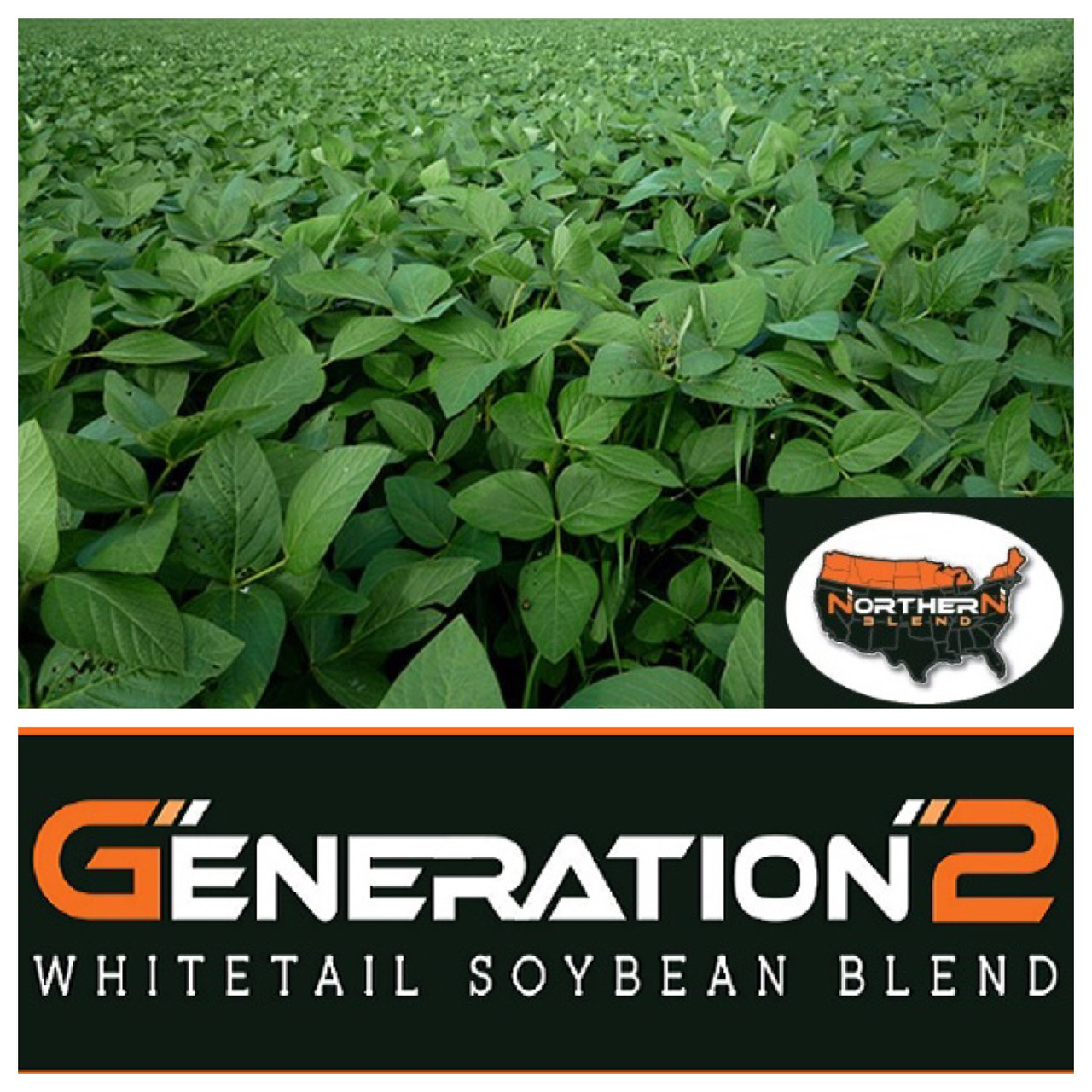 Real World Soybeans Northern Blend
