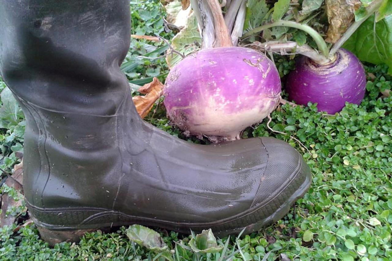 Real World Wildlife Plot Topper Turnips