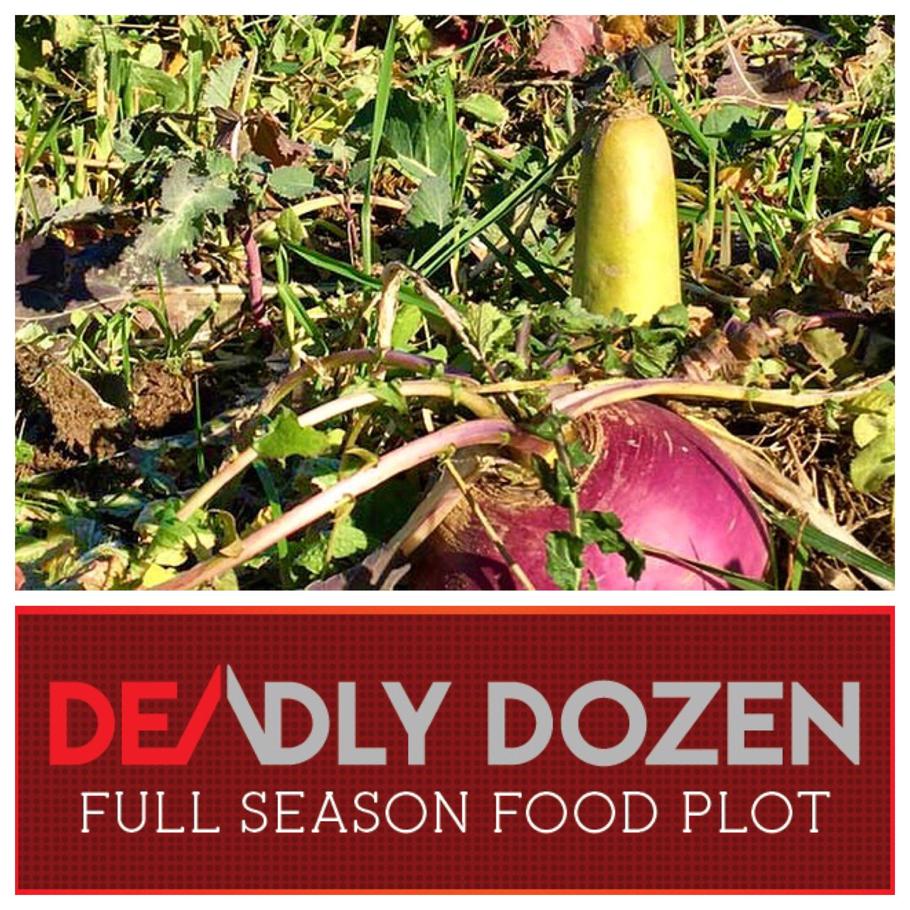 Real World Deadly Dozen Food Plot Seed Blend
