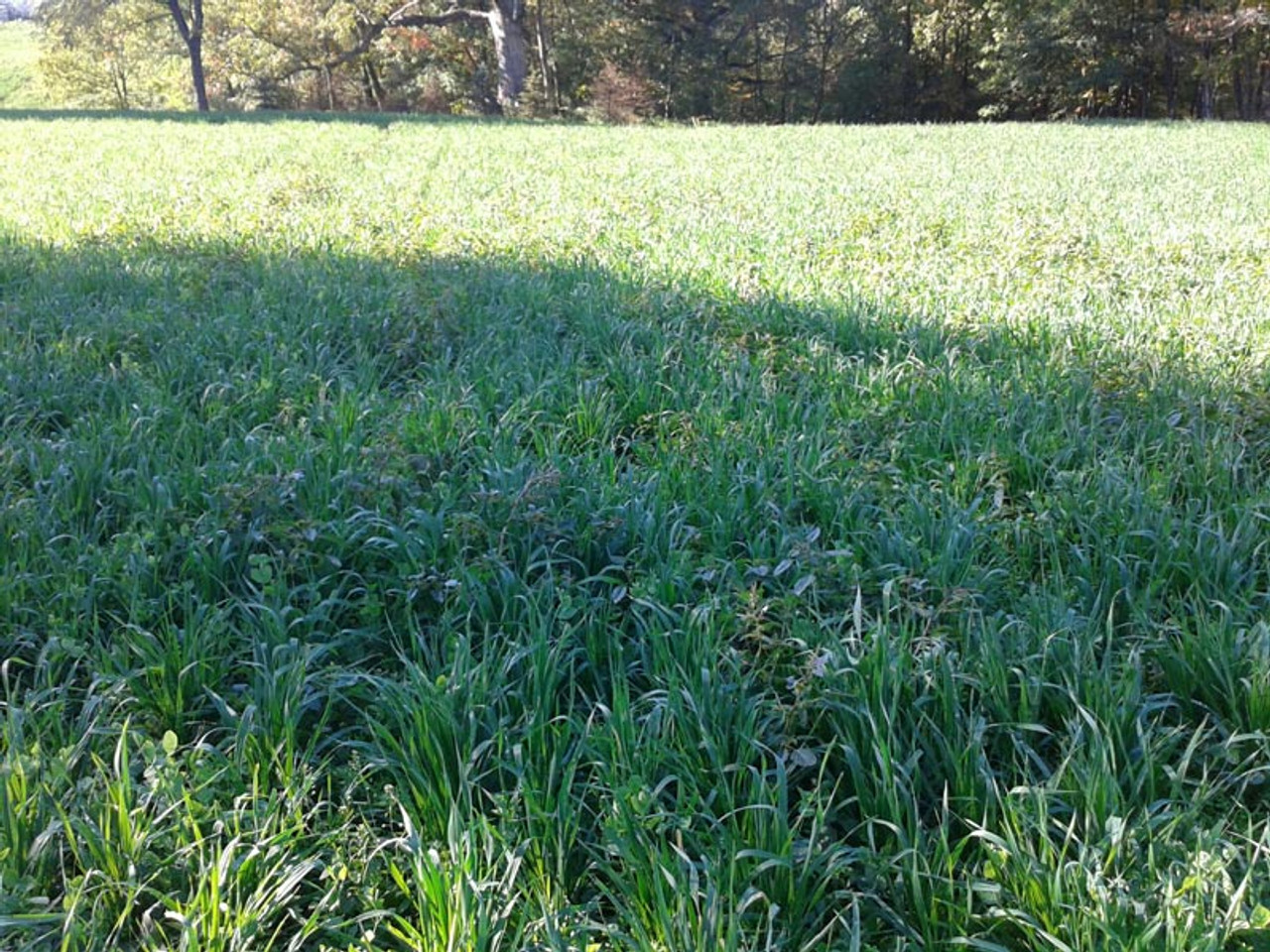 Real World Harvest Salad Food Plot