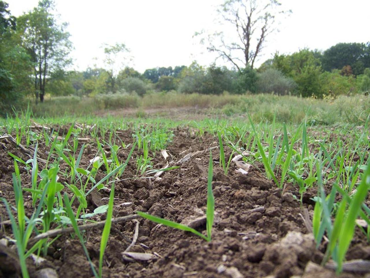 Real World Harvest Salad After Planting