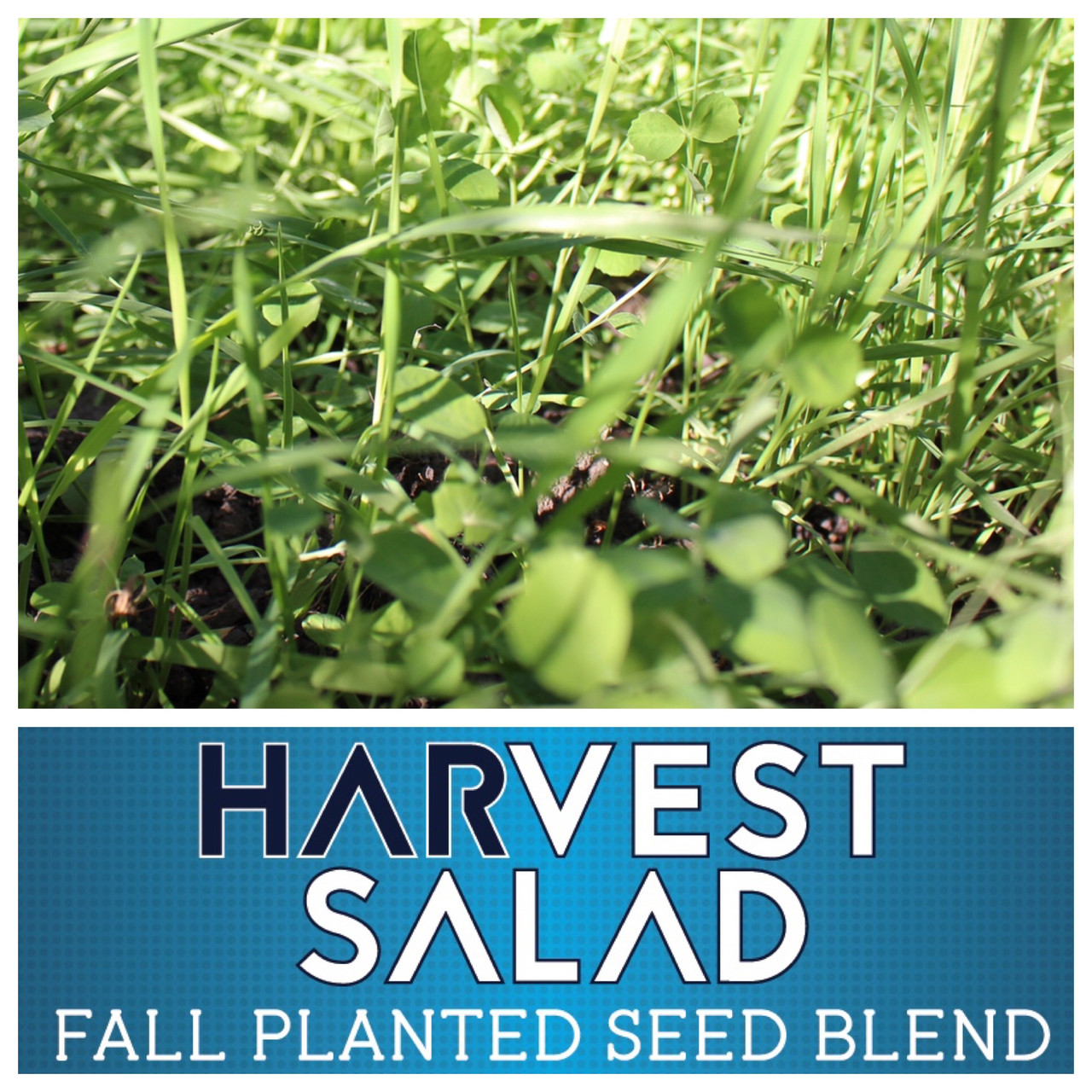Real World Harvest Salad Food Plot Seed