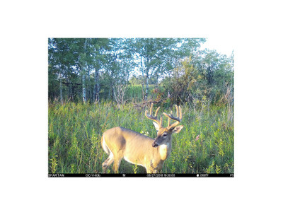 Best Trail Cameras? Which Cameras Are The Best For You.