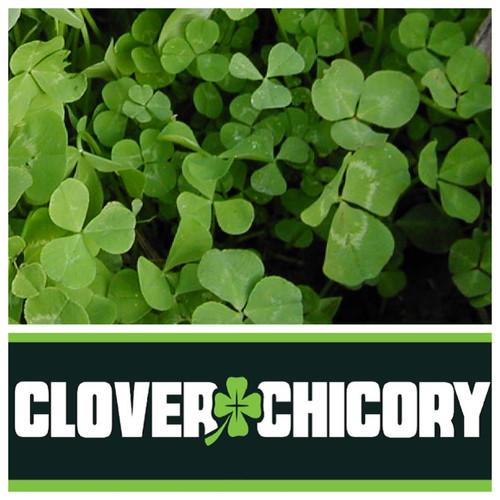 Real World Wildlife Chicory & Clover