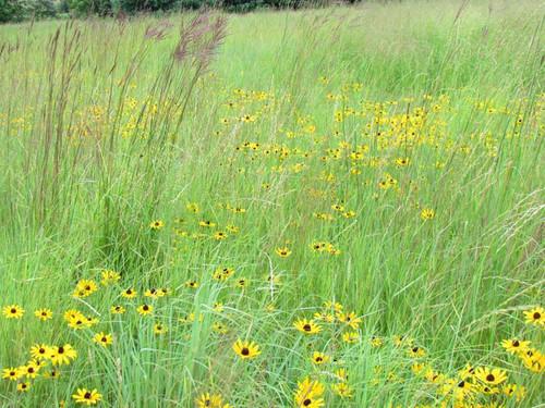 Real World Wildlife Custom Native Grass Seed Blend