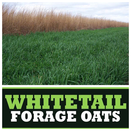 Real World Wildlife Whitetail Forage Oats