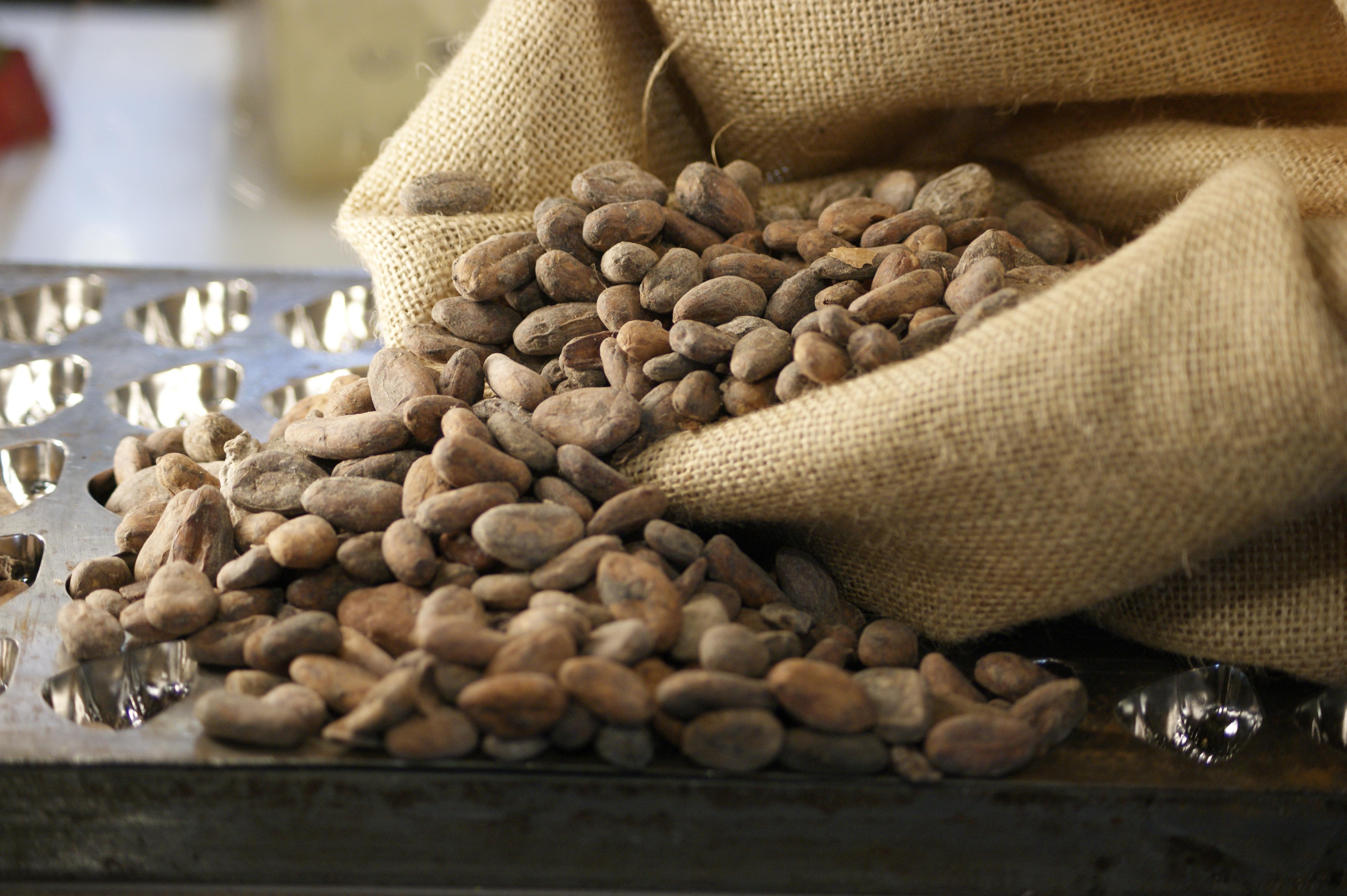 cocoa-bean-raw-gradingjpg.jpg