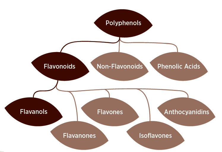 what-are-polyphenols-polyphenol-chart.png