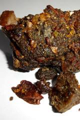Botanical Spotlight on Ayuervedic Herbal Medicine - Guggul (Commiphora mukul)