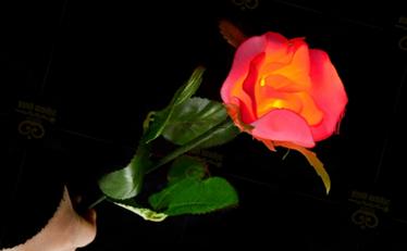 mm174-light-up-rose-in-dark.png