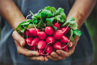 Get a Rosy Outlook on Radish Recipes