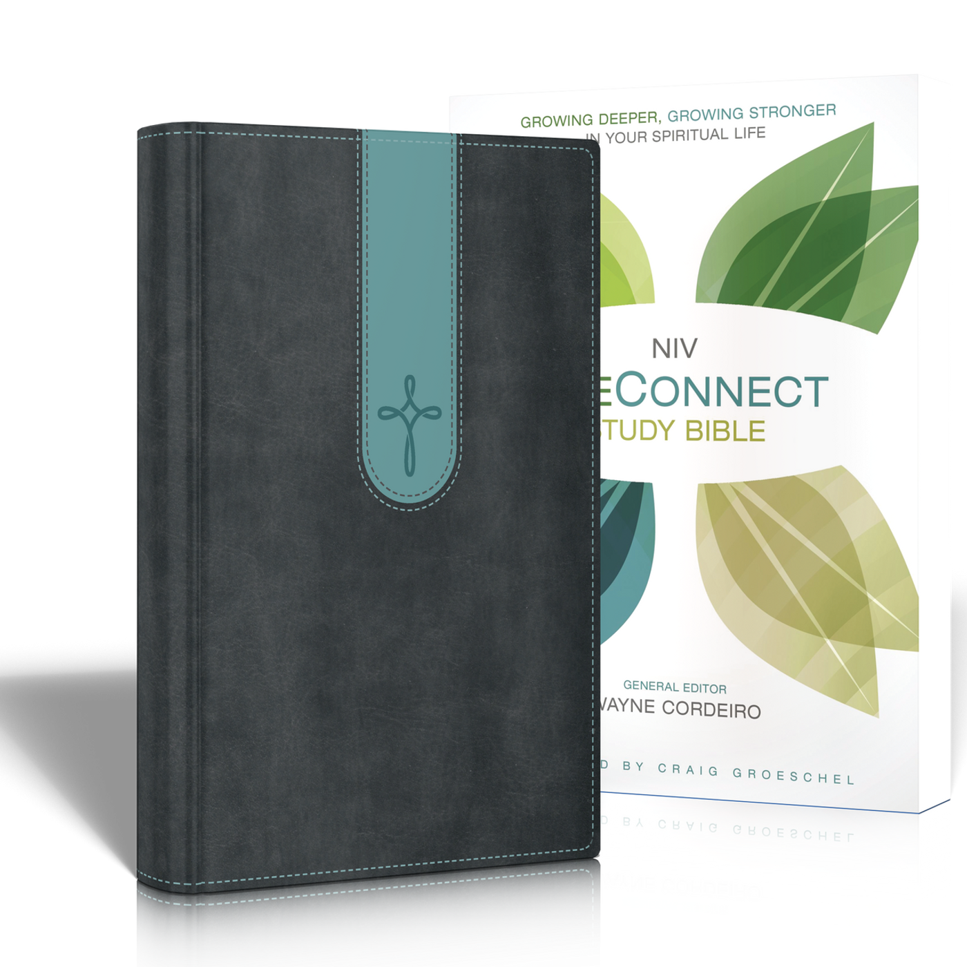 NIV LifeConnect Bible