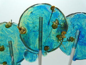 Aqua Tangerine Chamomile Lollipos - Seven Included