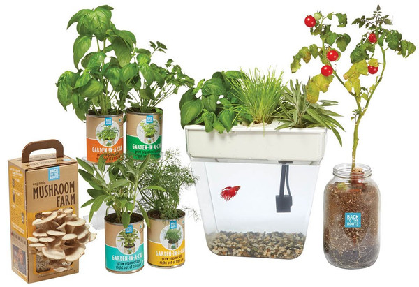 The Urban Homesteader Gift Set - Back to the Roots