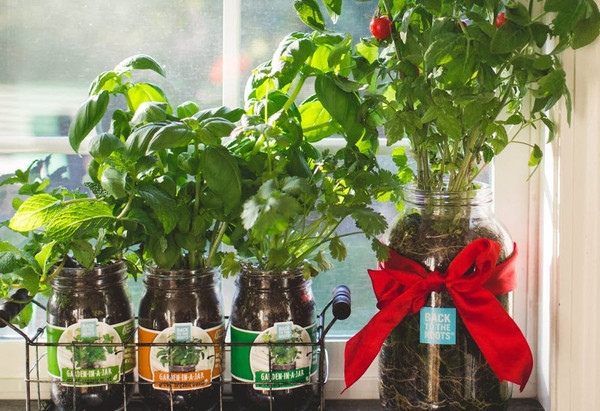 The Mason Jar Gift Set - Back to the Roots