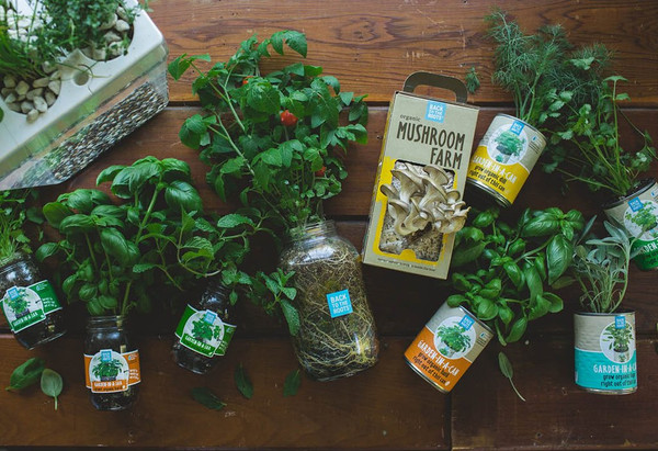 The Family Farmhouse Gift Set - Back to the Roots