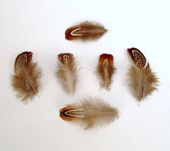 Davis Pheasant Almond Feathers (Approx. 20)