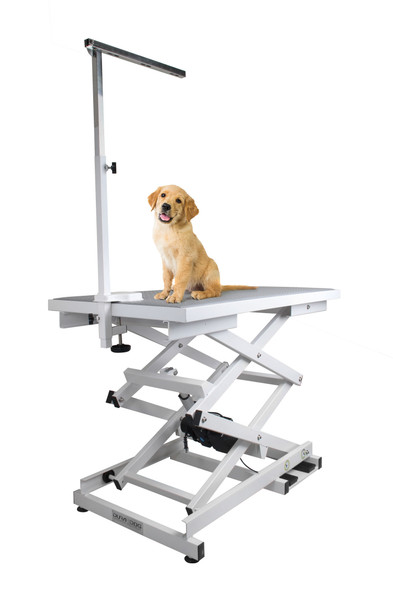 Dog on a grooming table