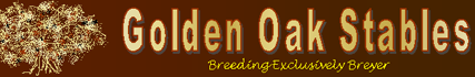 Golden Oak Stables
