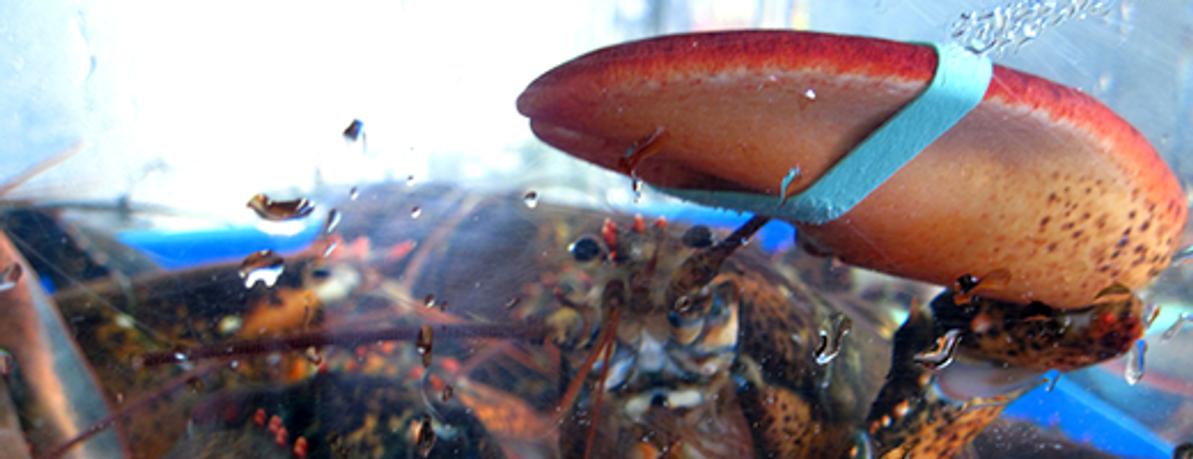 Aquariums & Lobster Tanks