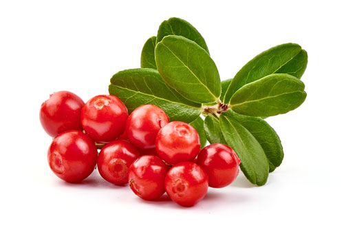 Close-up of red lingonberries