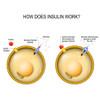 How does insulin work? DuraDetox® Berberine HCL Supplement - Blood Sugar & Cholesterol Support*. GLUTEN FREE • NON GMO • VEGAN