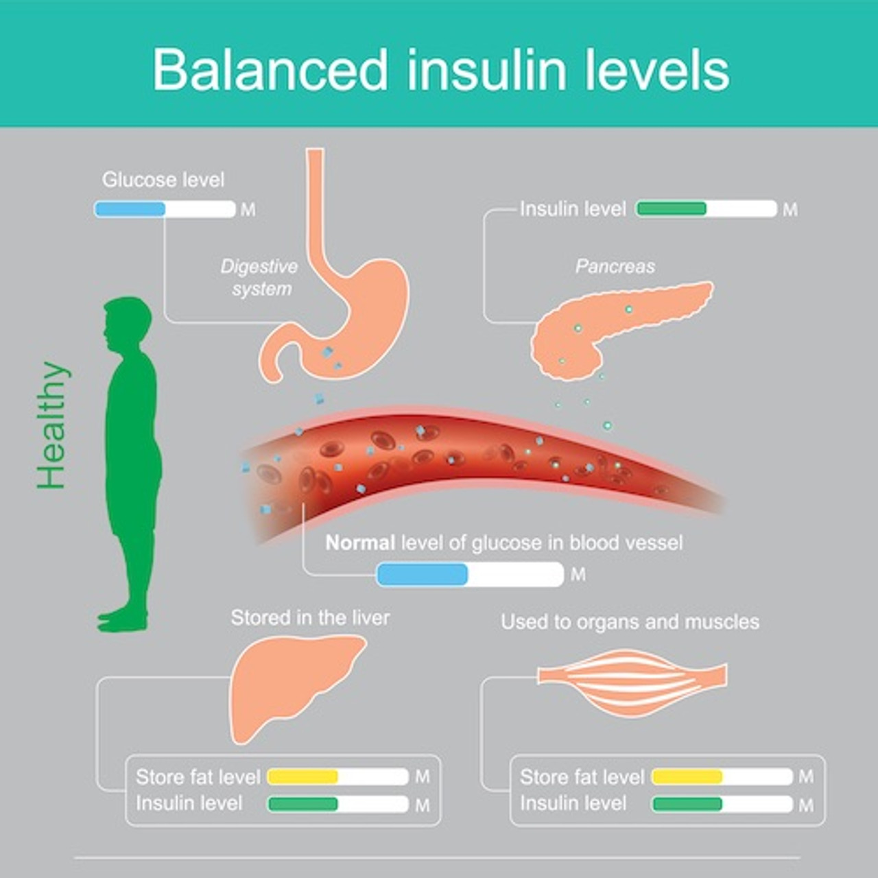 Balanced insulin levels - DuraDetox® Berberine HCL Supplement - Blood Sugar & Cholesterol Support*.