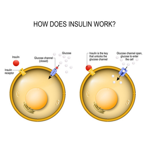 How does insulin work? DuraDetox® Berberine HCL Supplement - Blood Sugar & Cholesterol Support*. GLUTEN FREE • NON GMO • VEGAN