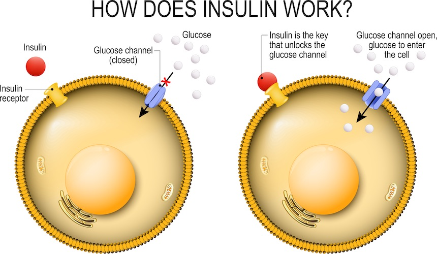 how-does-insulin-work-duradetox-berbarine-hcl.jpg