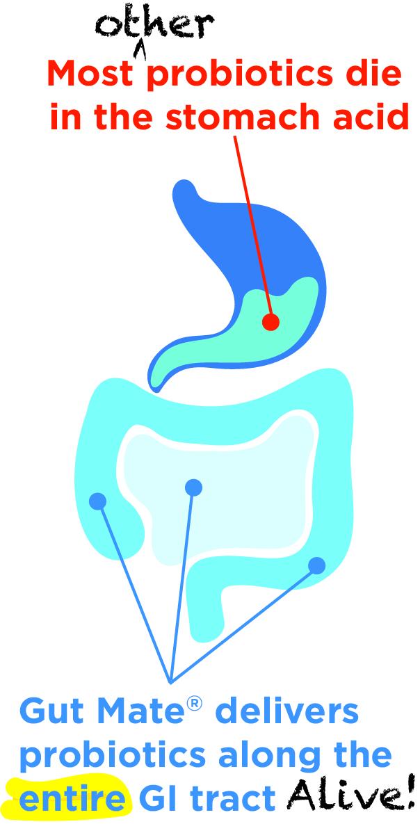 stomach-acid.jpg