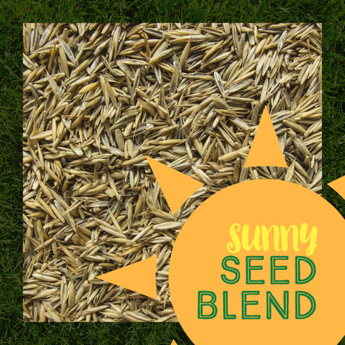 grass seed for sun