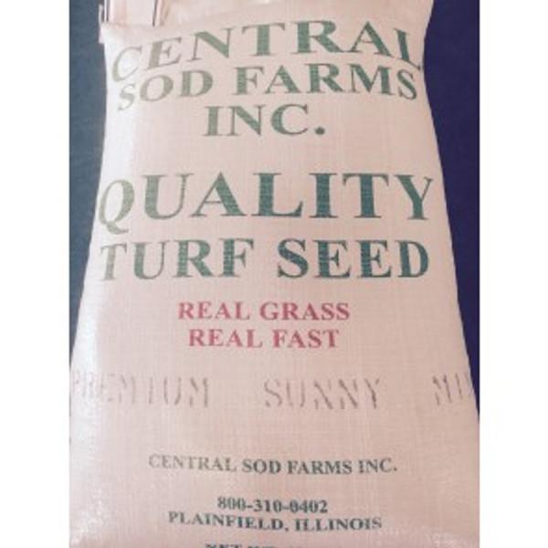sunny grass seed