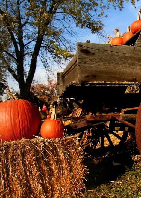 Selfie Booth Backdrop, Pumpkin Wagon